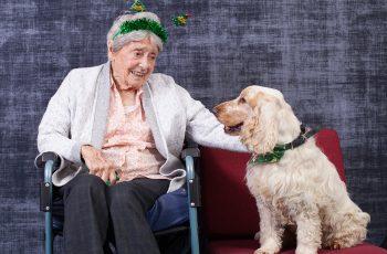 Christmas party and santa dog